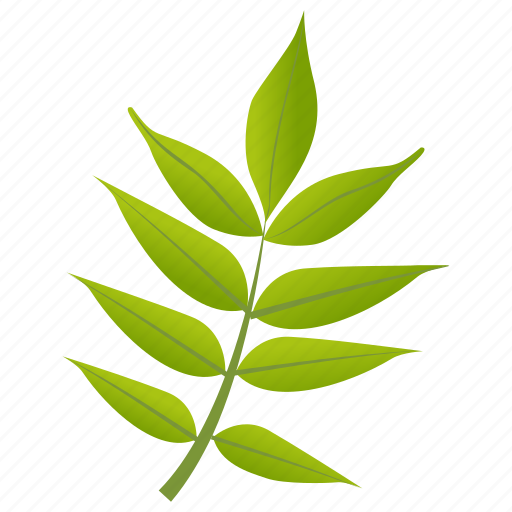 foliage, green leaves, leafy twig, leaves, sorbus americana icon