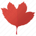 autumn leaf, leaf, leaf in fall, maple leaf, red maple icon