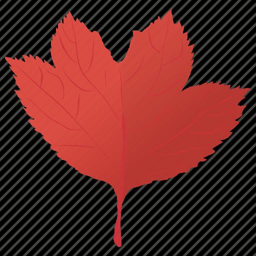 autumn leaf, leaf, leaf in fall, maple leaf, red maple icon