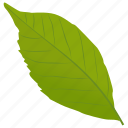 ash leaf, foliage, green leaf, leaf, simple leaf icon