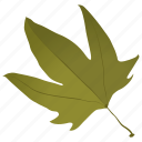 autumn leaf, foliage, green leaf, leaf, maple leaf icon