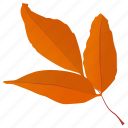autumn leaves, foliage, generic leaves, leaf in fall, leafy twig