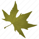 foliage, generic maple, green leaf, maple leaf, sugar maple icon