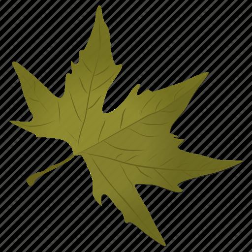 foliage, generic maple, green leaf, maple leaf, sugar maple icon
