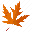 autumn leaf, foliage, leaf in fall, maple leaf, silver maple icon