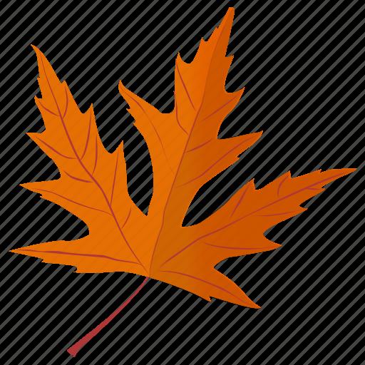 autumn leaf, foliage, leaf in fall, maple leaf, silver maple icon