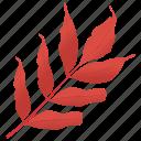 autumn leaf, foliage, leaf in fall, leafy twig, white ash icon