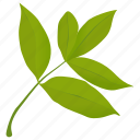 elder leaves, foliage, green leaves, leafy twig, leaves icon