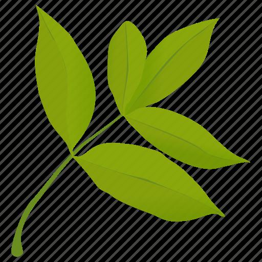 elder leaves, foliage, green leaves, leafy twig, leaves icon