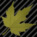 autumn leaf, foliage, green leaf, leaf, maple leaf icon