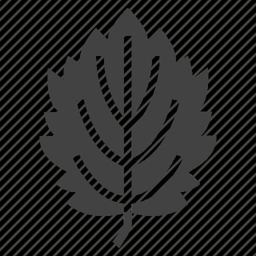 alder, autumn, leaf, nature, tree icon