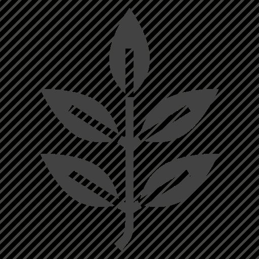 ash, autumn, leaf, nature, tree icon