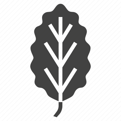 autumn, beech, leaf, nature, tree icon