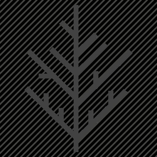 autumn, cedar, leaf, nature, tree icon