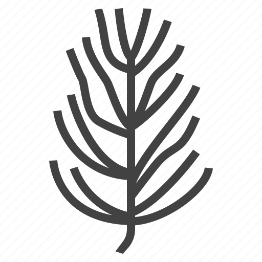 autumn, leaf, nature, pine, tree icon
