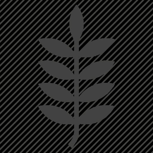 autumn, leaf, nature, rowan, rowanberry, tree icon
