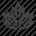 guelder, leaf, nature, rose, tree, viburnum icon