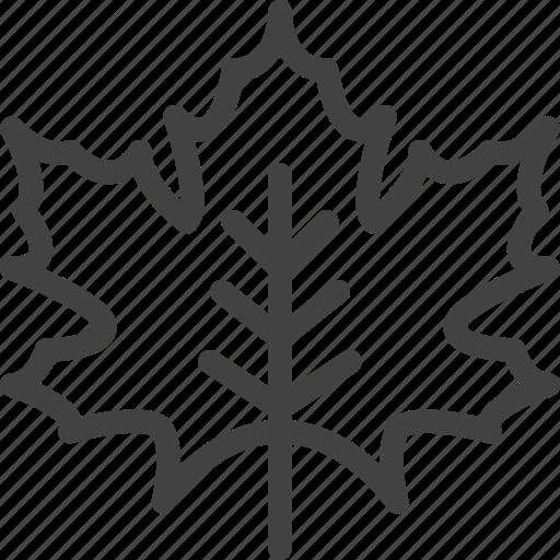 autumn, fall, leaf, maple, nature, plant icon