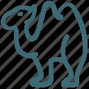 animal, camel, doodle
