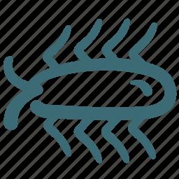 animal, avatar, bug, cockroach, doodle icon