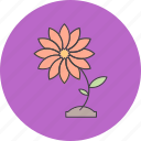 flower, natural, nature, plant icon