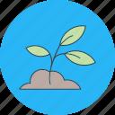 plant, soil icon