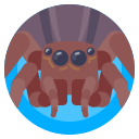 avatar, bug, insect, spider icon