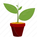 growing, growth, money, money plant, mutual funds, plant, saving