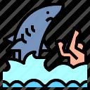shark, animal, jaws, water, attack, sea, swimming