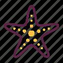 beach, marine, sea, starfish
