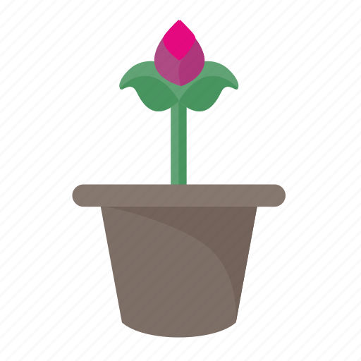 flower, home, plant, pot, rose icon