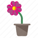 flower, home, plant, pot, rowan icon