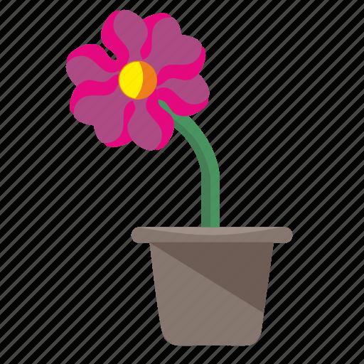 flower, home, plant, pot, rowan icon