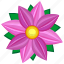 astra, bud, flower, nature, pink, violet icon
