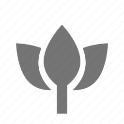 flower, lotus, spa icon