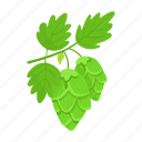 beer, green, hops, leaf, nature, plant icon
