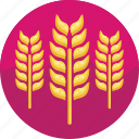 barley, beer ingredient, beer icon