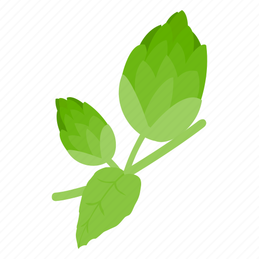 beer, botany, brew, flavor, hop, isometric, plant icon