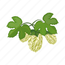 brewing, bump, hops, ingredient, plant, seeds icon