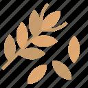 crop, grain, wheat