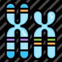 dna, biology, chromosome, gene, genetics