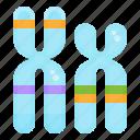 chromosome, dna, biology, gene, genetics