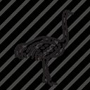 animal, bird, creature, nature, ostrich, wildlife