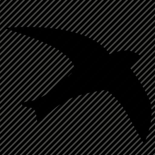 bird, fly, seagull, sky icon