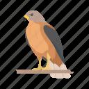 animal, bird, duck hawk, fish hawk, goshawk, hawk icon