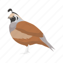 animal, beak, bird, plume, quail, valley quail icon