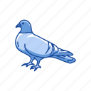 animal, bird, domestic pigeon, feather, homing pigeon, pigeon, wings icon