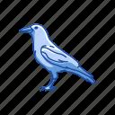 american crow, animal, bird, crow, raven, rook, wings icon