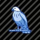 animal, bird, duck hawk, fish hawk, goshawk, hawk
