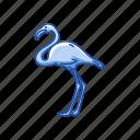 american flamingo, animal, bird, feather, flamingo, wading bird, waterfowl
